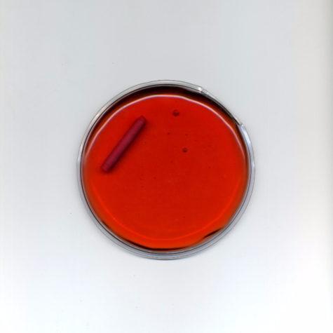 kolo-czerwone